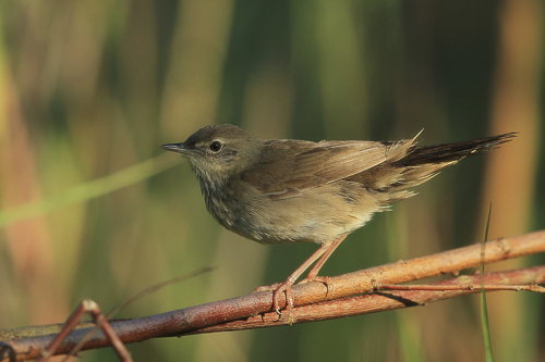 Warblers & Flycatchers